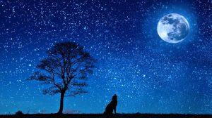 luna stelle-2